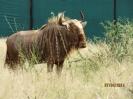 DVM Farming Goue Wildebeeste_3